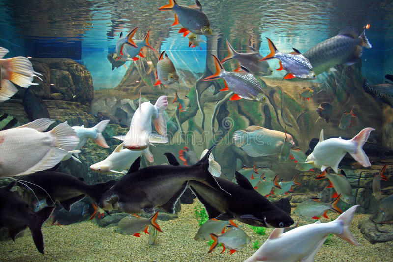 Various species of exotic fishes swimming together in aquarium stock photo