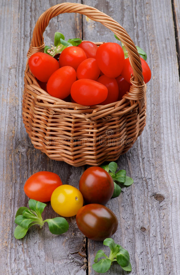 Various Tomatoes royalty free stock image