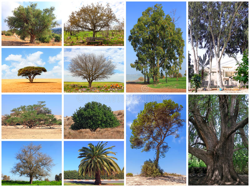 Various trees of Israel royalty free stock photo