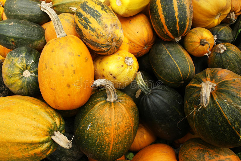 Various type of pumpkins stock photography