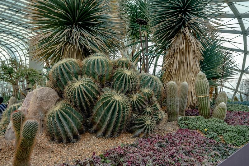 Various types of Cactus in Flower Dome, Singapore.  stock photos
