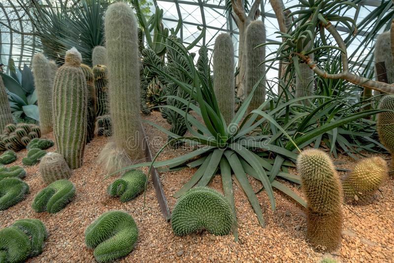 Various types of Cactus in Flower Dome, Singapore.  stock photography