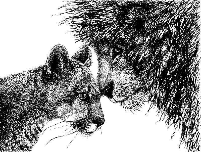 varje lionlioness som ser annan arkivfoto