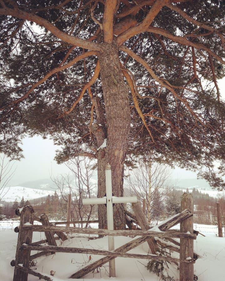 Varje mycket intressant träd royaltyfri foto