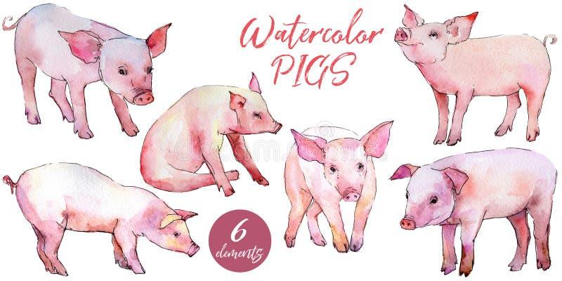 Varkens wild dier in een geïsoleerde waterverfstijl vector illustratie