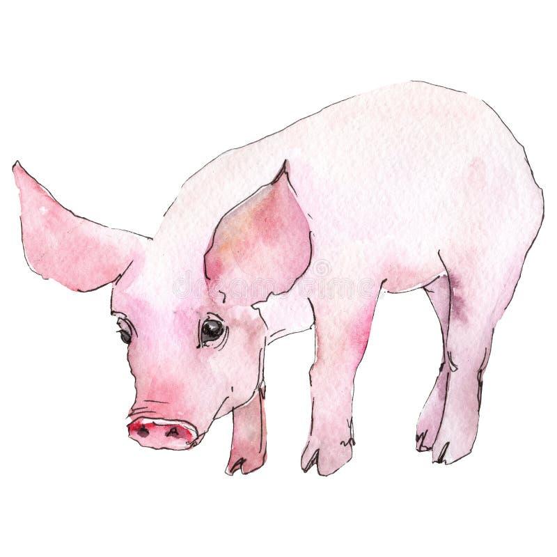 Varkensdier in een geïsoleerde waterverfstijl Aquarelle wild dier voor achtergrond, textuur, omslagpatroon of tatoegering vector illustratie