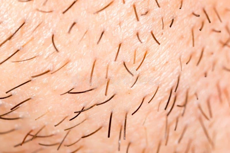 Varkenshaar op de baard van een mens royalty-vrije stock foto's