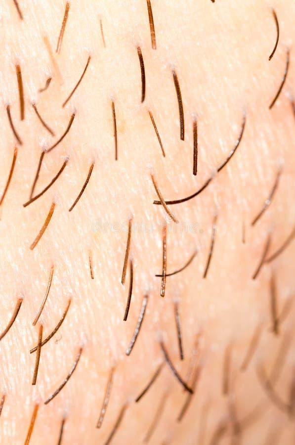 Varkenshaar op de baard van een mens royalty-vrije stock foto