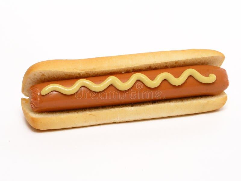 varm hund arkivfoto