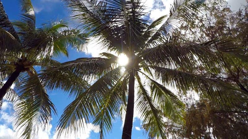 Varm och bländande sol till och med de kust- palmträden arkivbilder