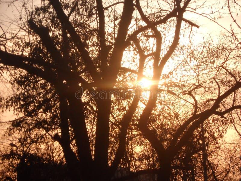 Varm solnedgång bak ett träd arkivfoton