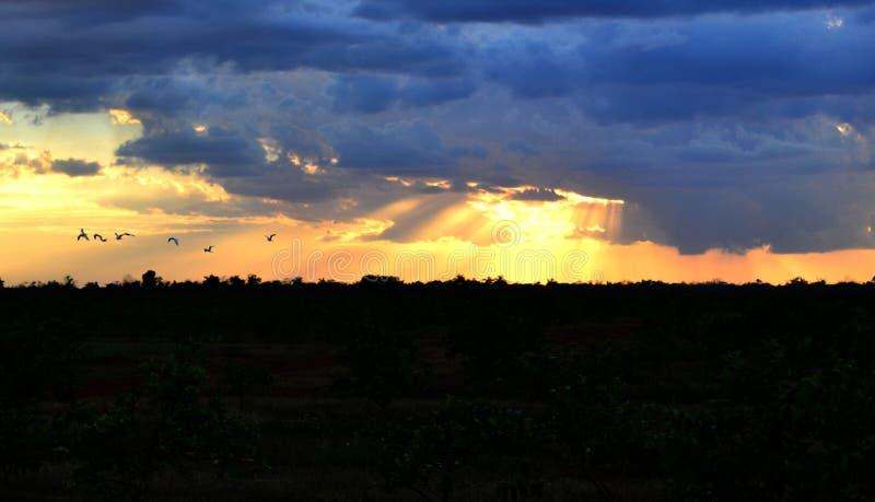 Varm solnedgång på vildmarken av frihet cuba royaltyfri fotografi