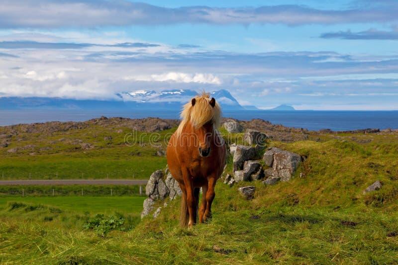Varm sommardag i Island arkivbilder