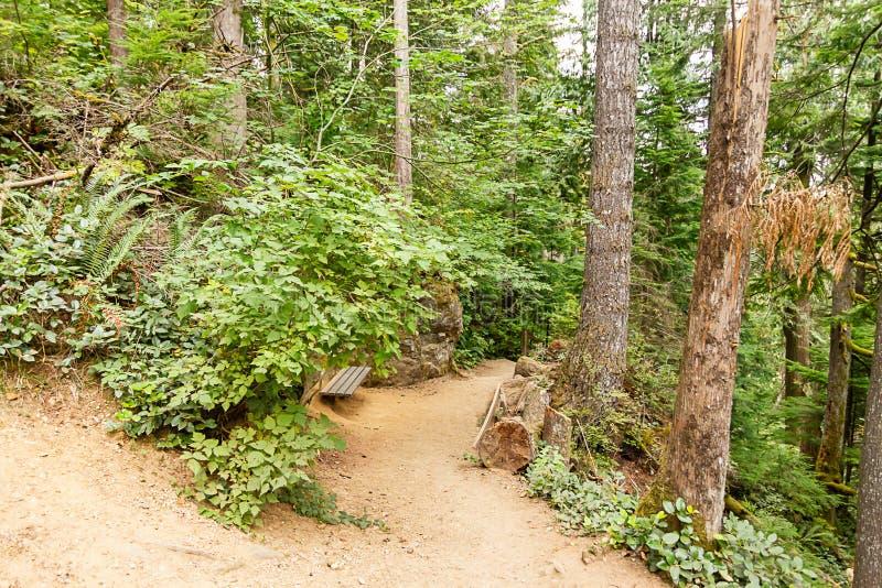 varm sommarsmutsslinga till och med skog med bänken på kanten av slingan fotografering för bildbyråer