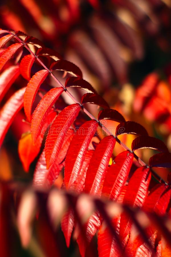 Varma Autumn Background