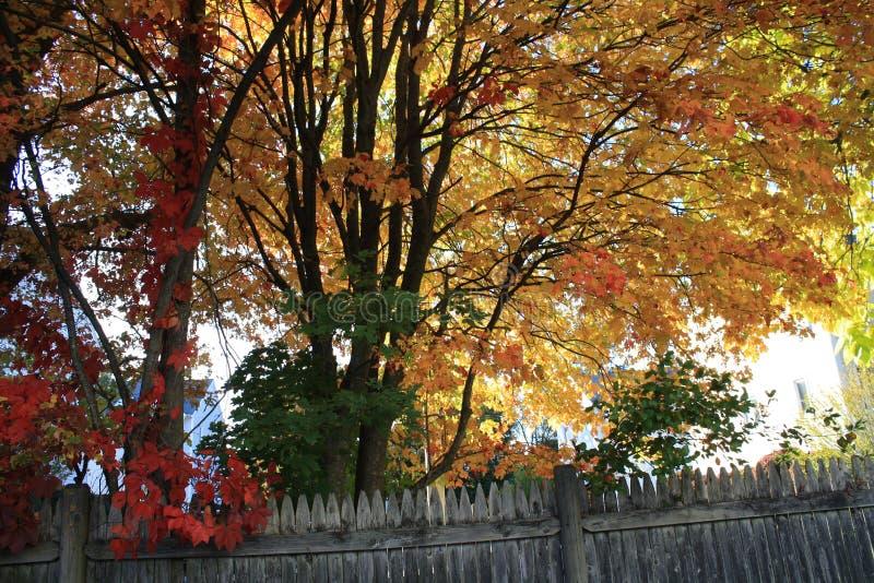 Varma Autumn Foliage New England arkivfoto