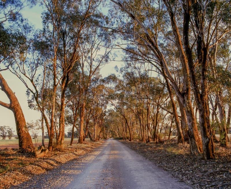 Varma färgträdlinjer landsgrusväg som sträcker in i avstånd nära Parkes lantliga Australien arkivbilder