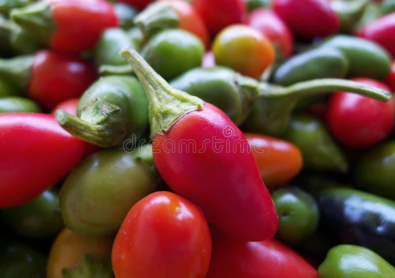 varma peppar för chili royaltyfri fotografi