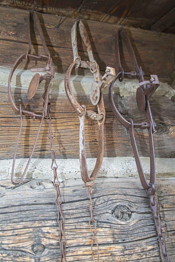 Varmint eller hänga för prärievargvårfällor arkivbild