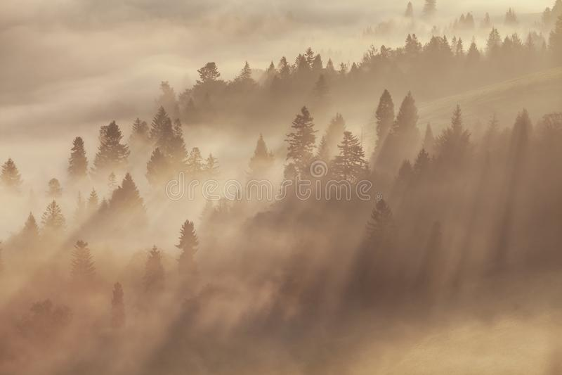 Varmt höstlandskap i en skog, med solen som gjuter härliga strålar av ljus till och med misten och träden majestätisk sikt royaltyfria bilder