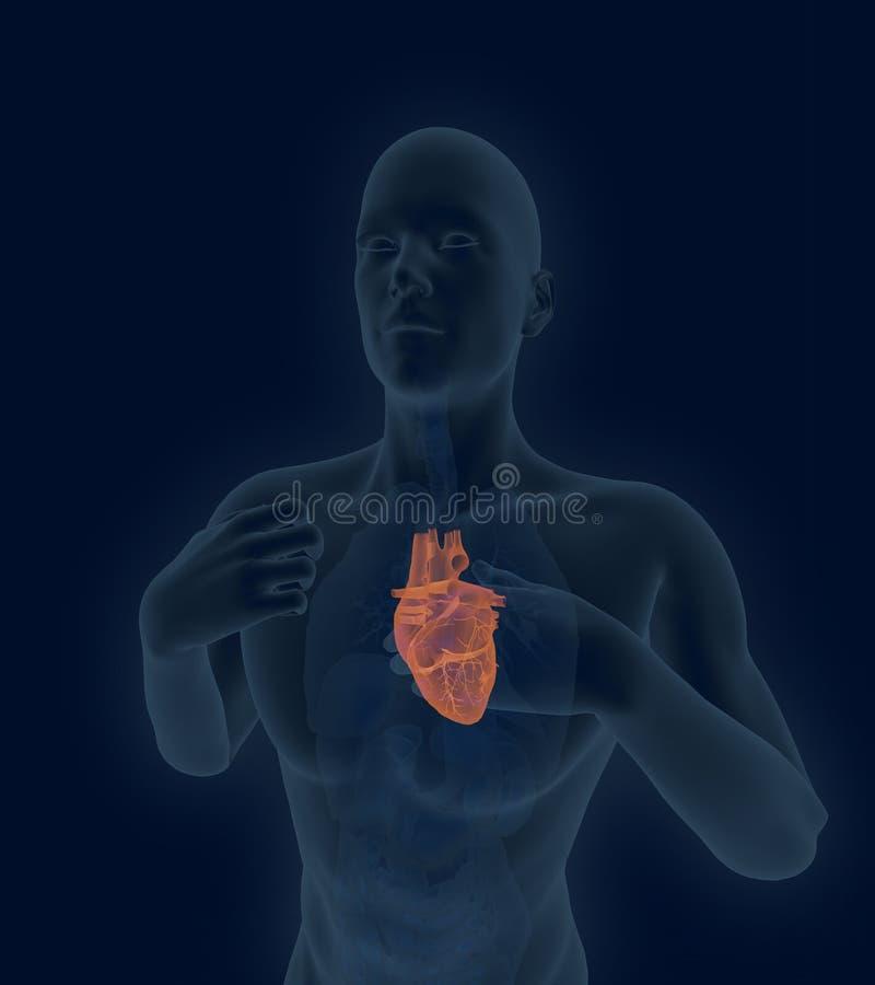 Varredura do coração humano com doença arterial coronária e hearta ilustração do vetor