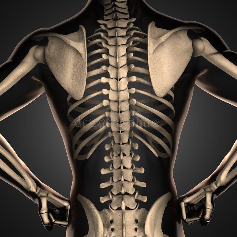 Varredura humana da radiografia com ossos ilustração royalty free