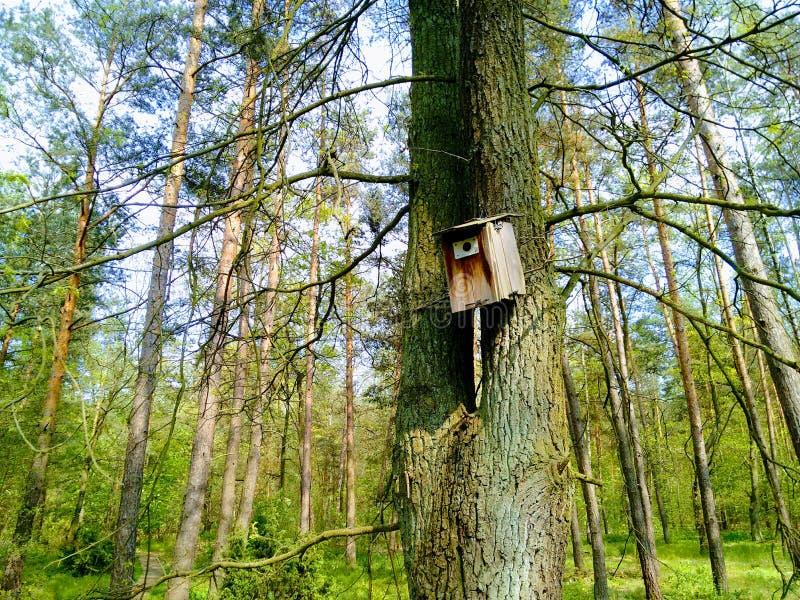 Varsovia es, Varsovia está cambiando Casa del pájaro en el árbol stock de ilustración