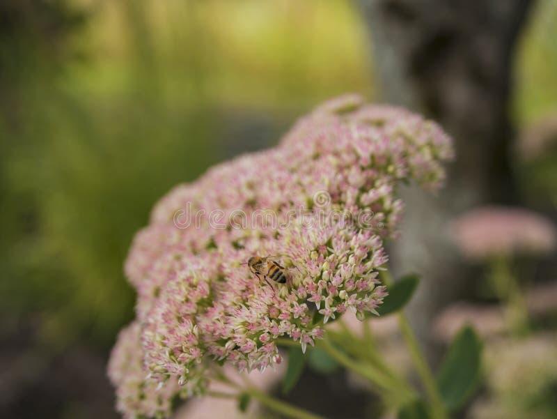 Vart i blomma royaltyfria foton