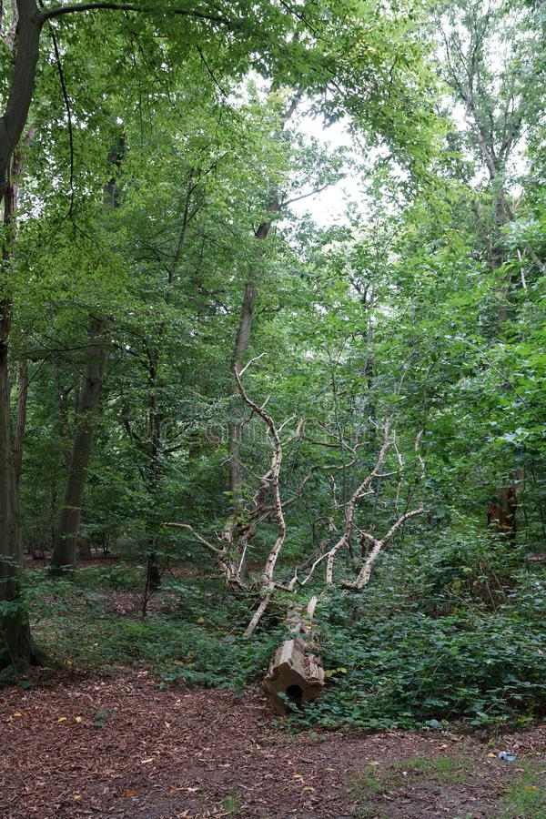 Vart sågat träd fotografering för bildbyråer