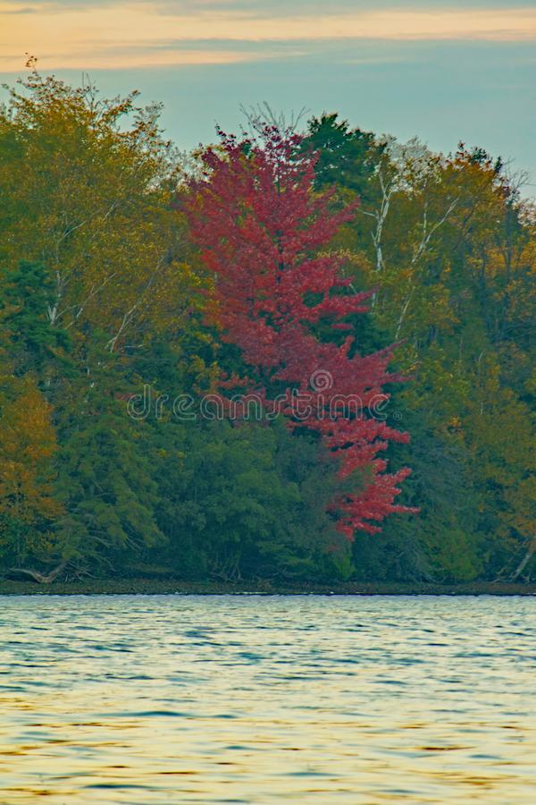 Varying Colors Of Autumn Along The Lakefront royalty free stock images