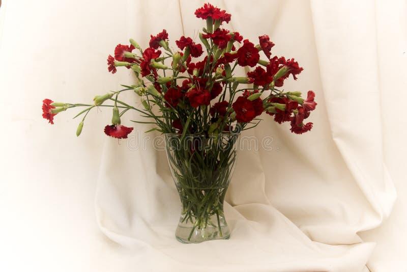 Vas med röda nejlikor på tygbakgrund royaltyfri bild