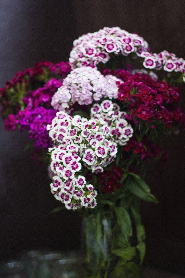 Vas med röda och rosa nejlikablommor Bukettnejlikor Effekt av korntextur, selektiv fokus royaltyfri foto
