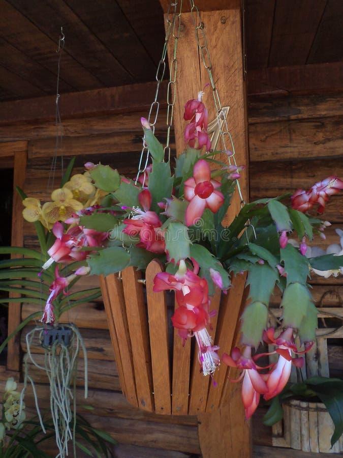 Vas med röda siden- blommor arkivfoton