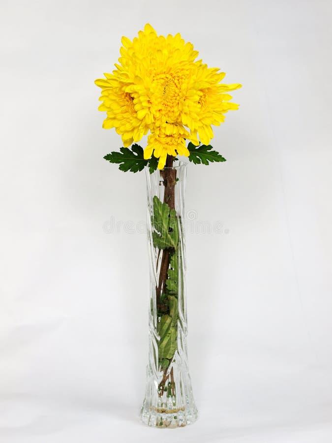 Vase à fleur de chrysanthemum photos stock