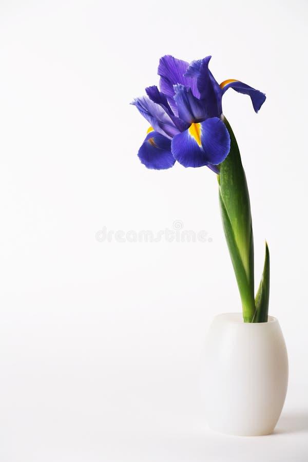vase κρίνων ίριδων ανασκόπησης &e στοκ φωτογραφία με δικαίωμα ελεύθερης χρήσης