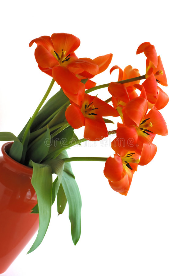 Vase de tulipes image stock