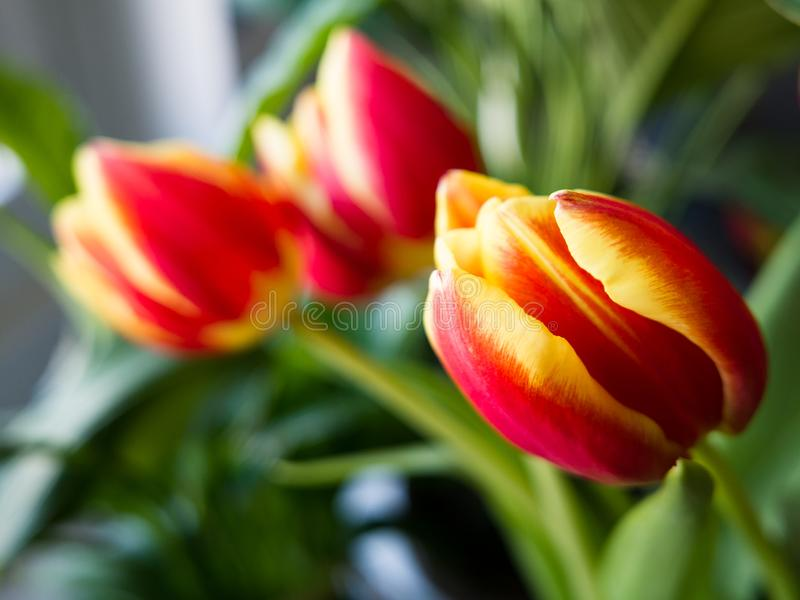 Vase de tulipes photographie stock