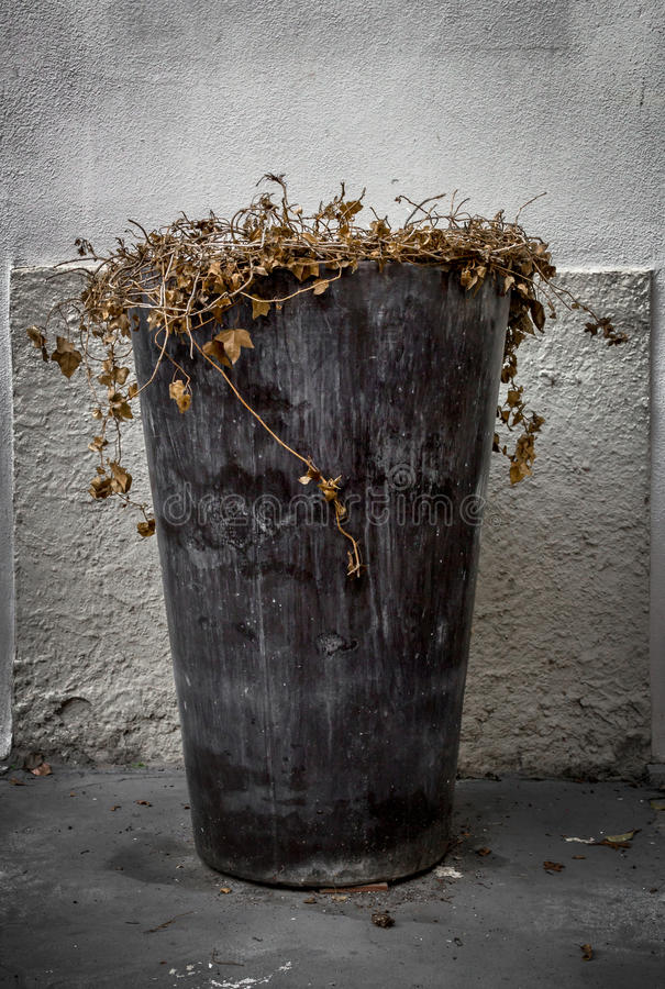 Vase of dead flowers. Large vase of dead flowers, placed on the sidewalk of a street stock images