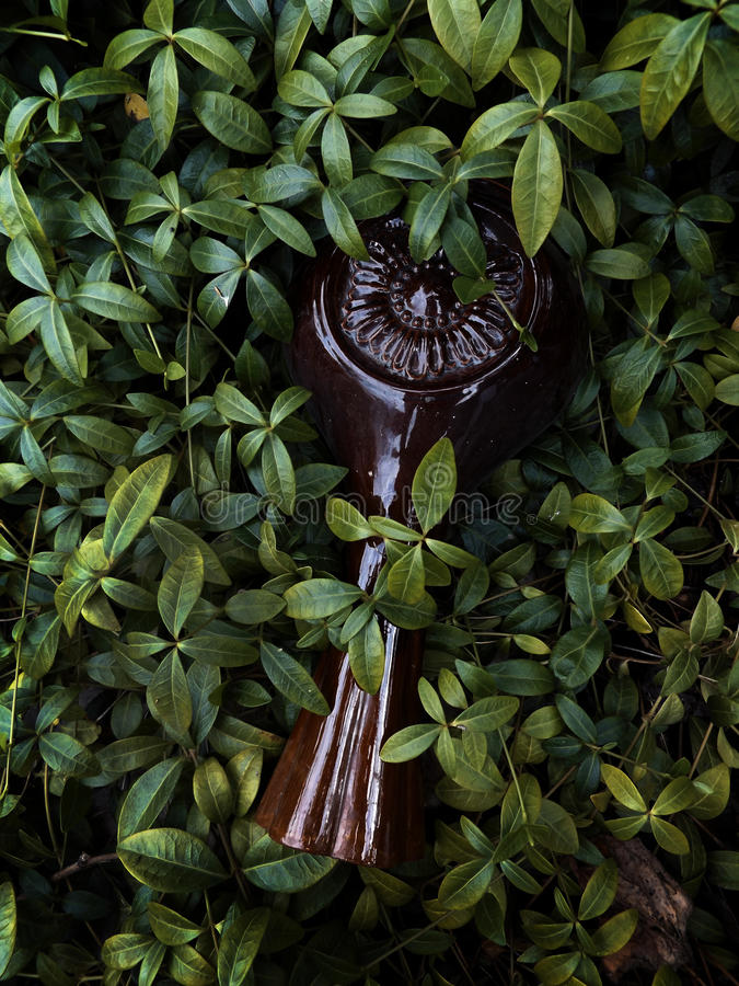 Vase in der Kriechpflanze stockfotografie