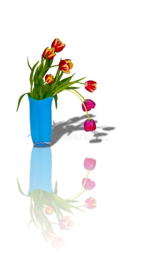 vase för 6 buketttulpan arkivbild
