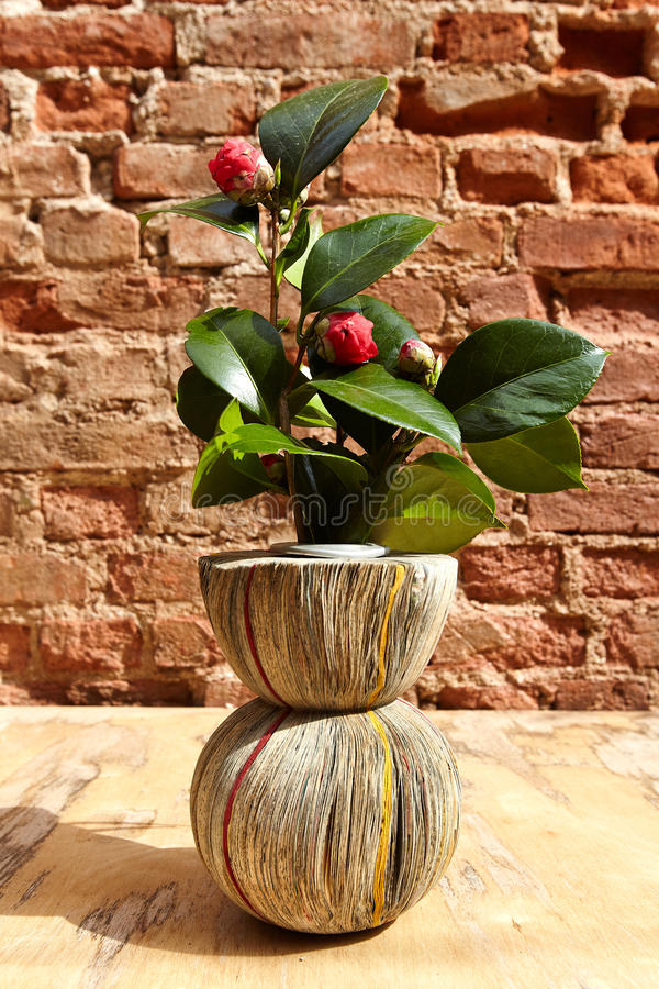 Free Vase From Newspapers With Camelia Plant On A Wooden Table And Wa Royalty Free Stock Photos - 88479578