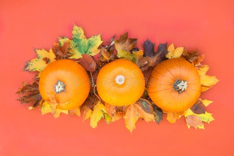 Vase mit trockenen Blättern, Apfel und Kerzen auf dem Rausschmiß Kürbise, getrocknete Blätter auf korallenrotem orange Hintergrun lizenzfreie stockbilder
