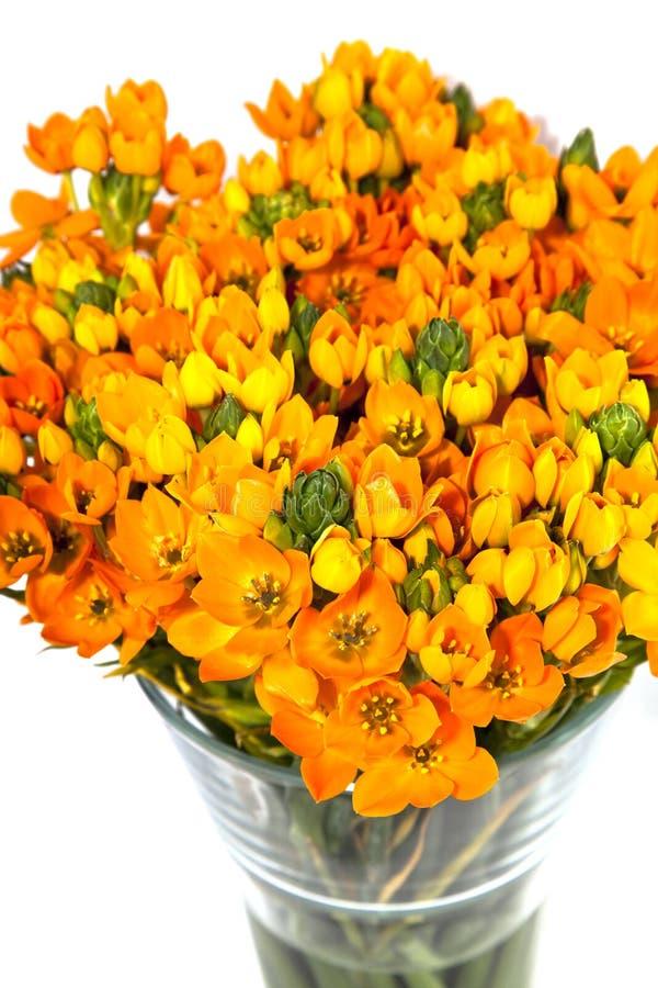 Download Vase with orange kalanchoe stock photo. Image of pistil - 24143520
