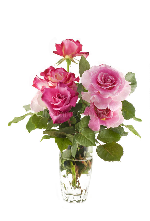 Vase of Pink Roses stock photo