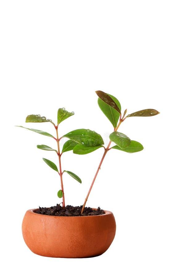 Vase_and_plant royalty-vrije stock foto