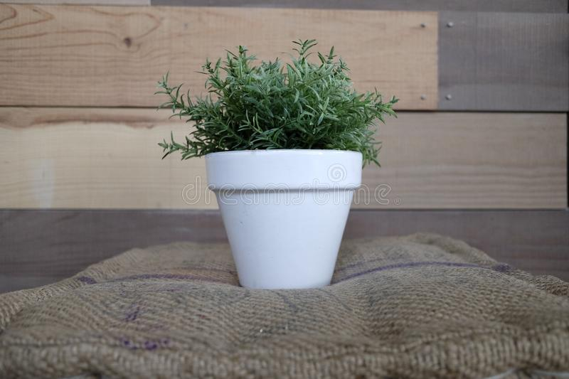 Vase with rosemary stock image