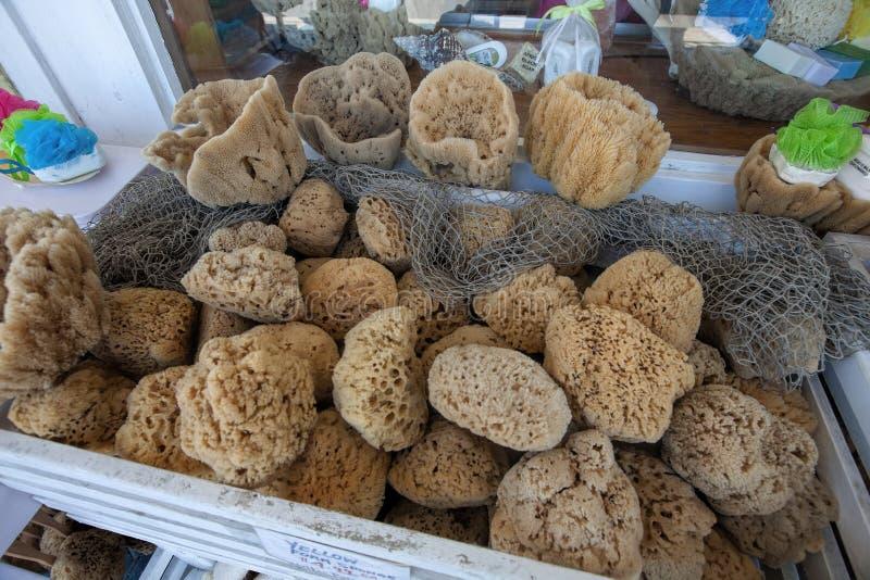 Vase Sponges in Tarpon Springs, Florida stock images