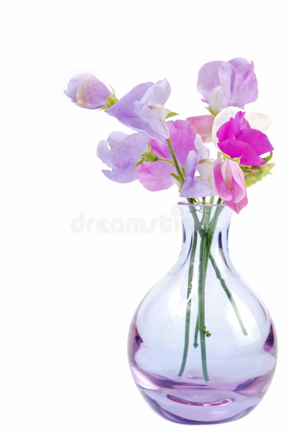 Vase of sweet pea flowers