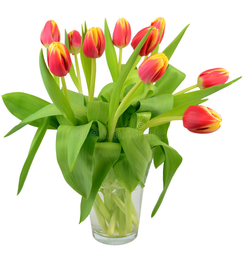 Download Vase with tulip flowers stock image. Image of head, nature - 22964647