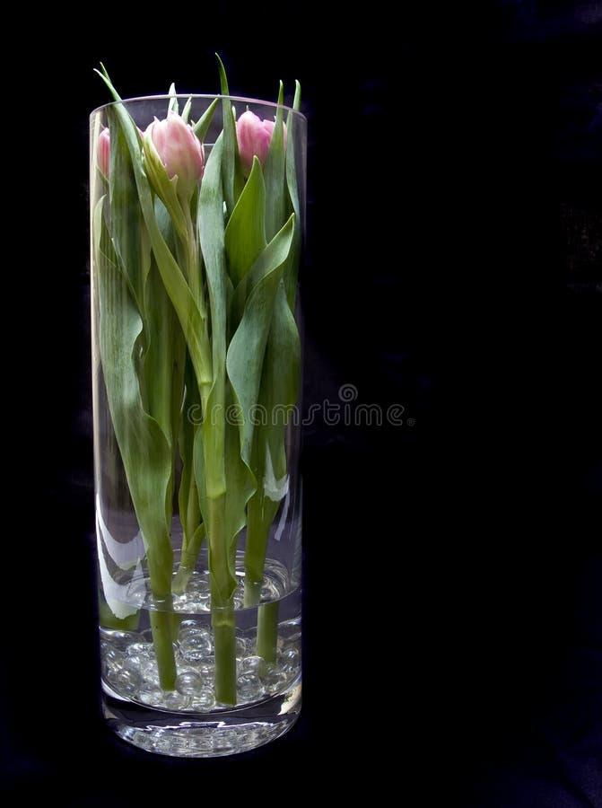 Vase of tulips royalty free stock photos